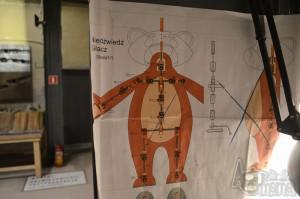 Se-ma-for Muzeum Animacji praca lalkarza
