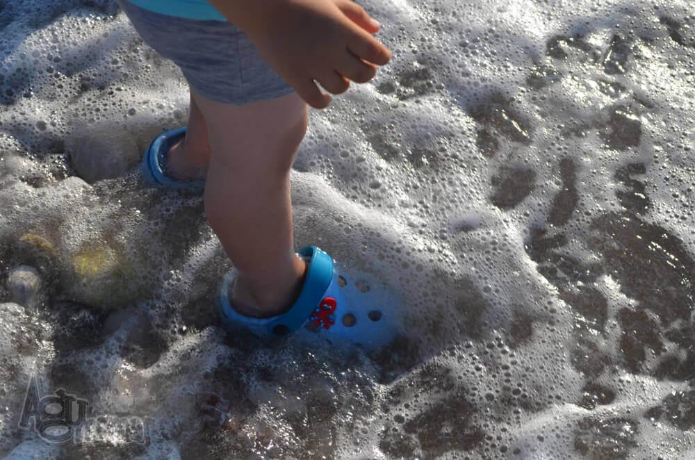 Polak na wakacjach Żółwik brodzi w morzu