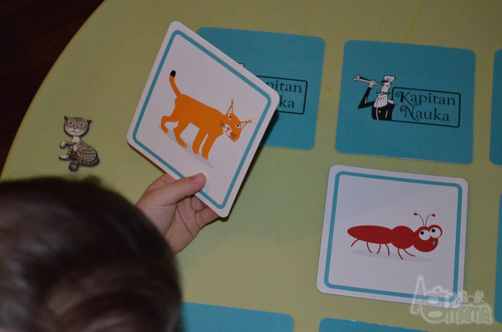 nauka zapamiętywania ryś i mrówka