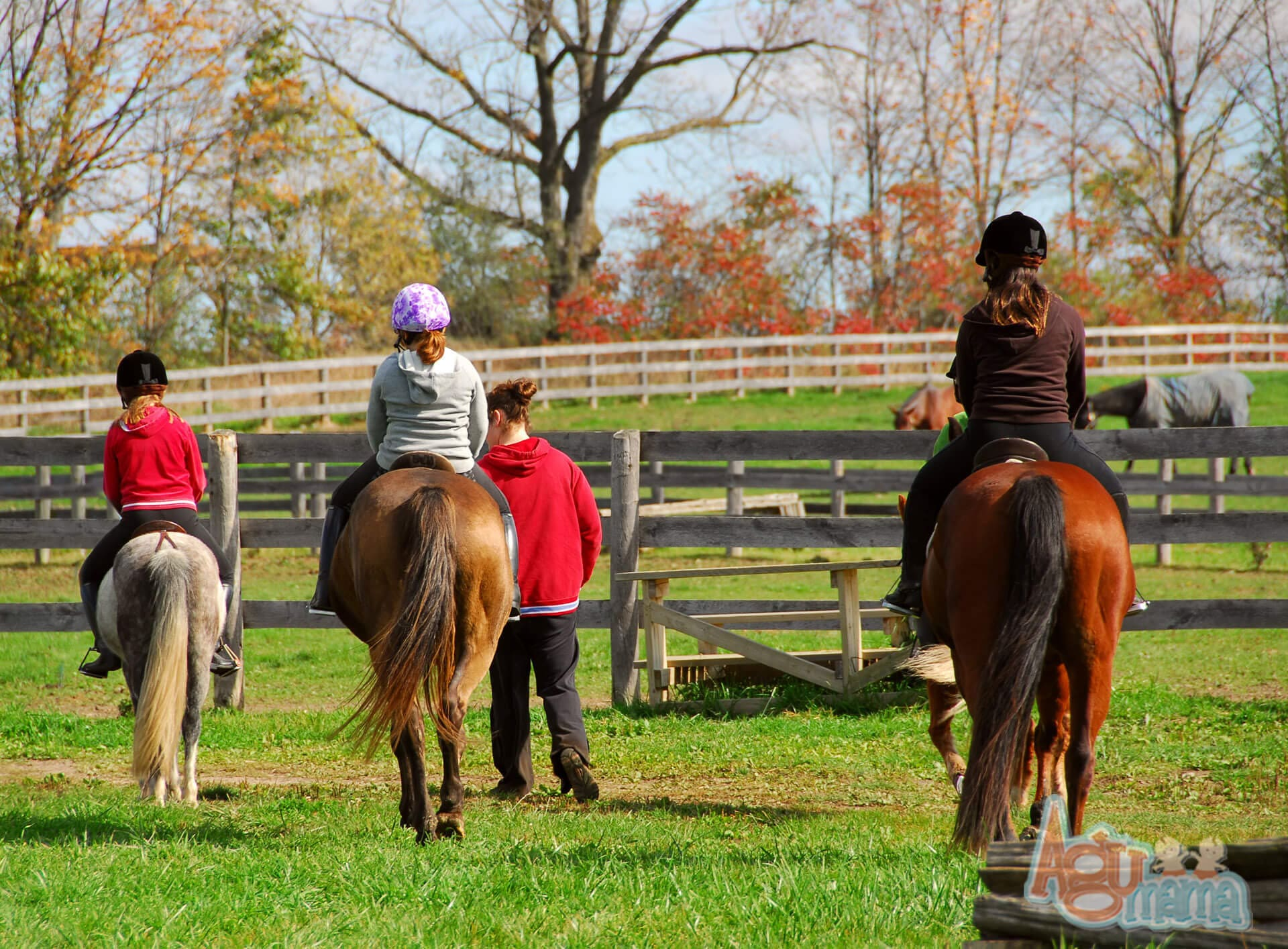ubezpieczenie dziecka nauka jazdy konnej